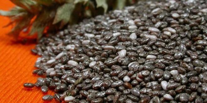 Opis leczniczych właściwości nasion chia