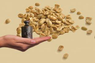 Jaki wpływ na nadwagę i odchudzanie ma zielona kawa?