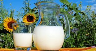 Mleko, a nietolerancja laktozy