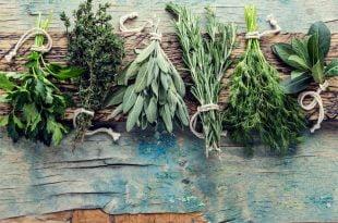 Jakie zioła odchudzające są najlepsze?