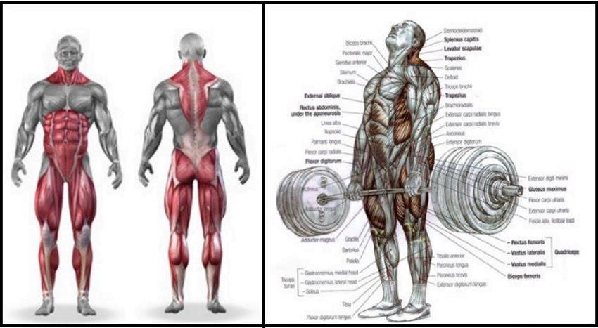 Mocny brzuch oznacza pracę nad wszystkimi mięśniami ciała.