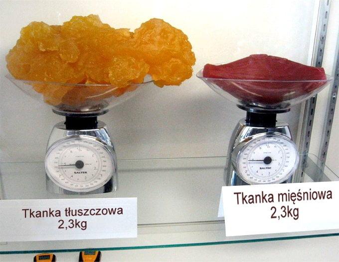 Porównanie wielkości kilograma tłuszczu i kilograma mięśni.
