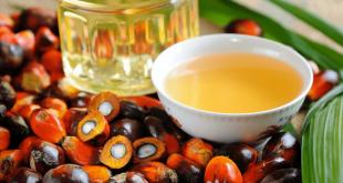 Szkodliwość oleju palmowego.